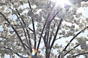 fruehling_spring_2