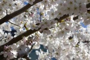 fruehling_spring_3